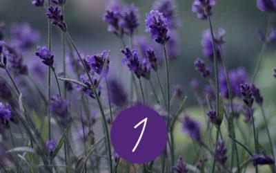 1. Raunacht – Destillation und Wirkung von Lavendel