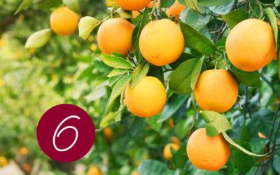 6. Raunacht: Destillation und Wirkung von Orange