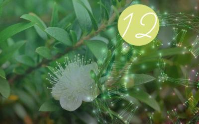 12. Raunacht: Myrte – Guter Duft / Böser Duft
