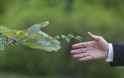 Ätherische Öle, Aromatherapie & Nachhaltigkeit