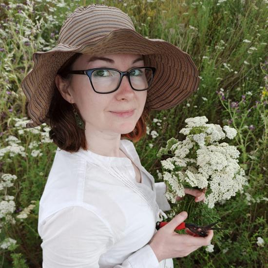 Julia Karpova bei der Achillea ligustica Ernte