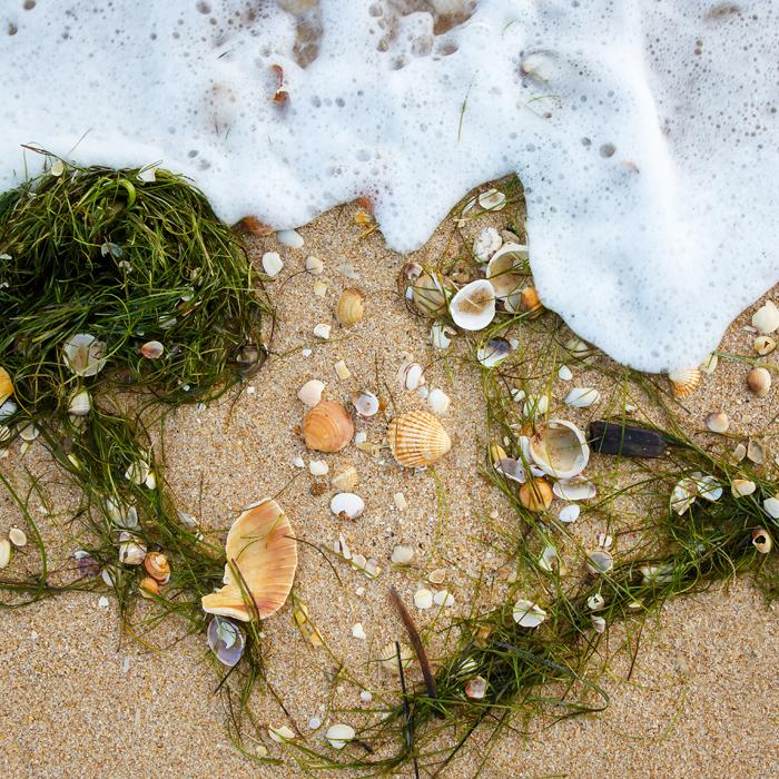 Sand, Seetang, Muscheln, schäumende Gischt